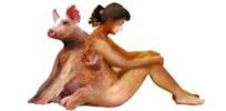 Transgenic pigs may usher in brave new world of xenotransplantation