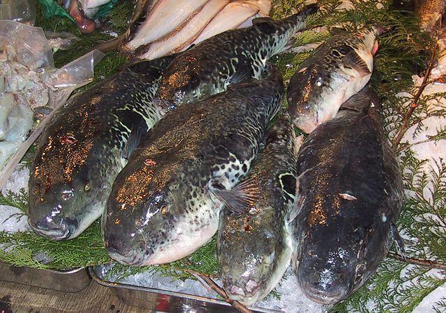 px Fugu Tsukiji CR