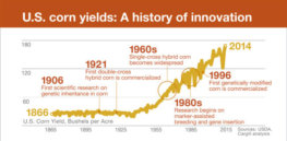 Infographic: Innovation in corn crops to feed hungry world