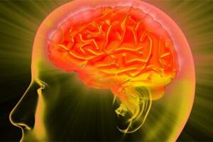 M Id brain