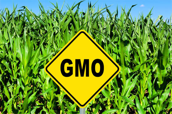 about GMOs food farm field