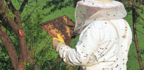 Here's new news about pesticides and bees