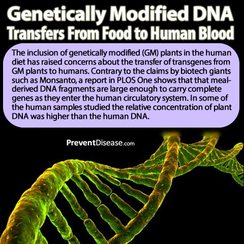 Omg gmo dna found in human blood whats meaning of this anti gmo omg gmo dna found in human blood whats meaning of this anti gmo meme malvernweather Images