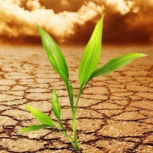 GMO climate change