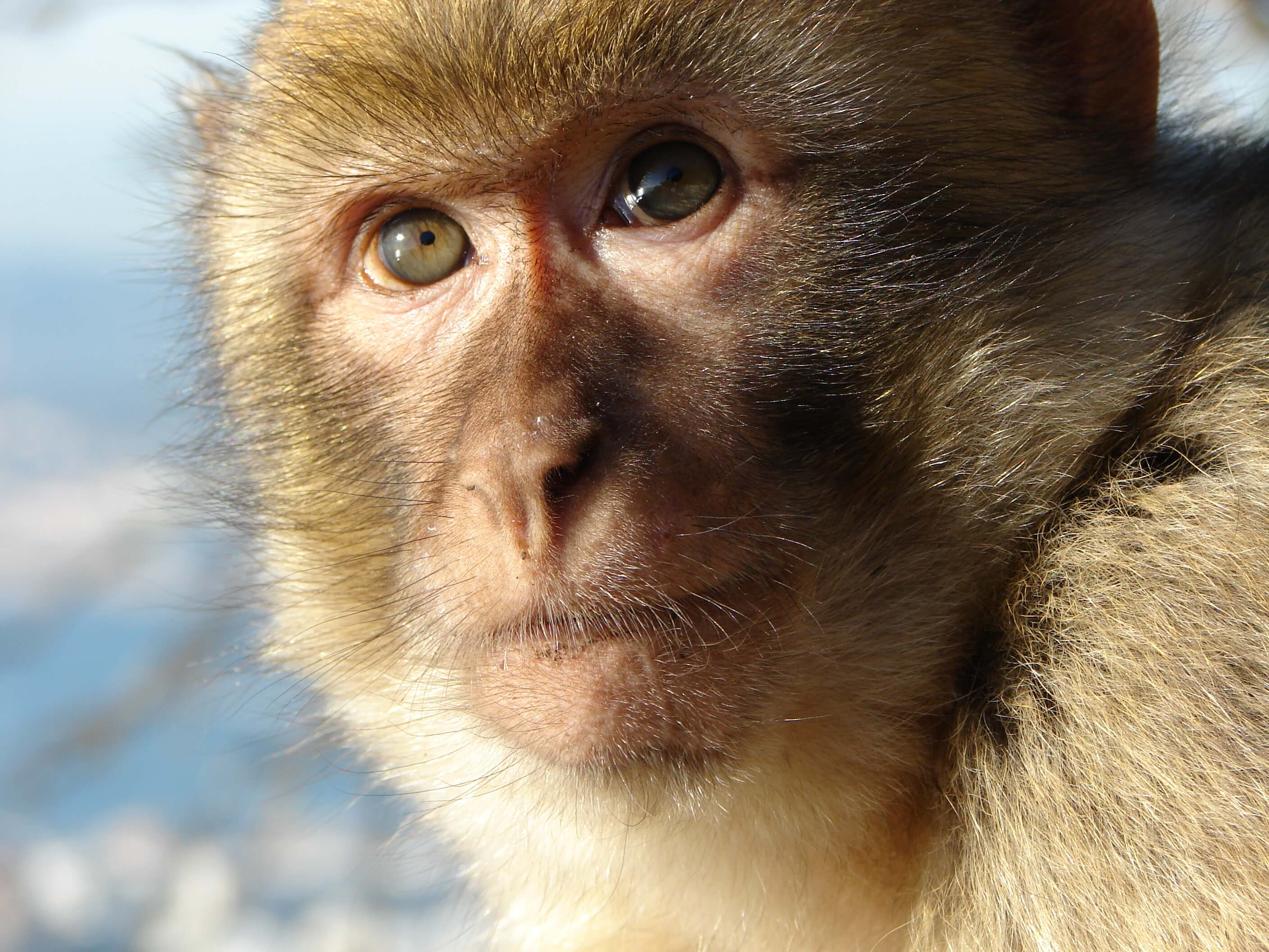 Genetically Modified Monkeys Might Aid Autism Research photo