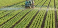 Why some activists want labels for GMOs but not for pesticides used by organic farmers