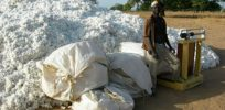Burkina Faso's Bt cotton not meeting expectations
