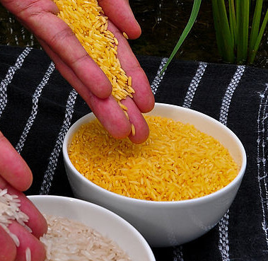 Whatever happened to golden rice?