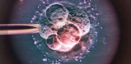 low C IVF embryo light micrograph SPL