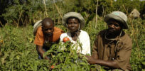 Hybrid seeds part of 'green evolution' that is improving agriculture in Africa
