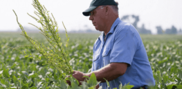 Downside trade-offs of reducing glyphosate use