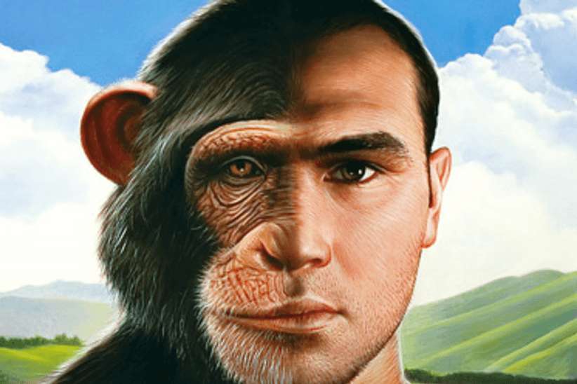 Image result for CHIMP VS HUMAN