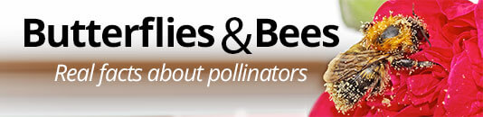 Butterflies and Bees: Real Facts on Pollinators