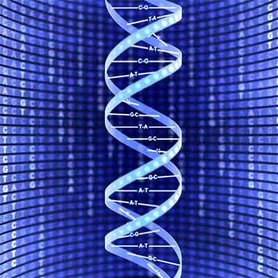 dna sequence small