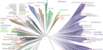 'Tree of Life' diagrams known evolutionary history of all life