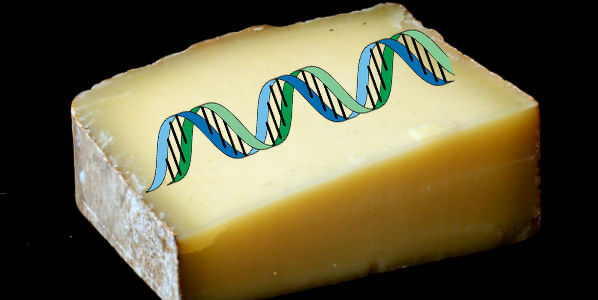 Cheese DNA