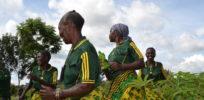 "Tanzanian women battle virus-fighting ""liberator"" cassava but challenges loom"