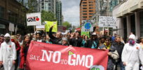 GMO opponents so 'disgusted' with GMOs that evidence will never change their minds