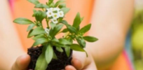 Changes in gene expression suggest plants may 'feel' touch