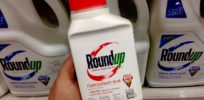 EPA posts, takes offline 'final' report concluding glyphosate 'not likely carcinogenic'