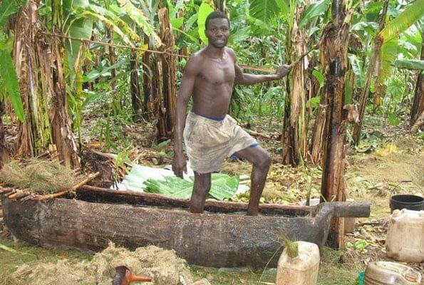 A feet beer maker extracting banana juice for making his favorite brew. Biotechnology could take those feet off the juice and more market created