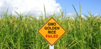 GMO Golden Rice Failed sign x