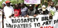 How anti-modern farming agroecology NGOs spread GMO misinformation in Africa