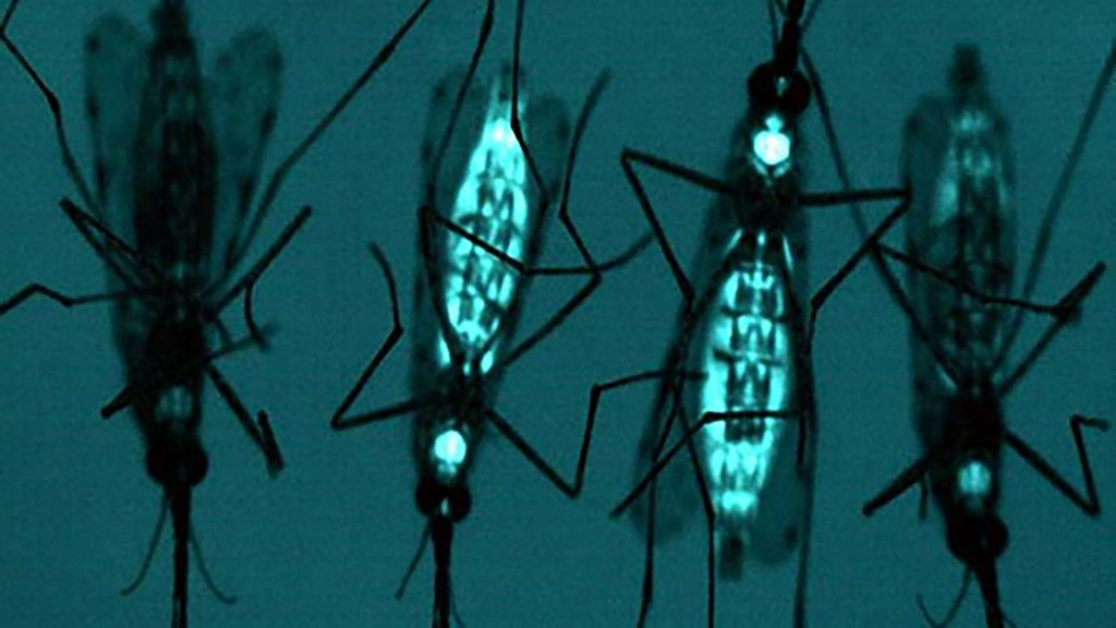 sn mosquitoes