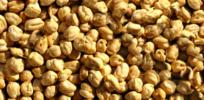 Switzerland bans GMO crops, but funds transgenic crop development in India