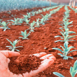 crops on mars