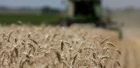 gmo food crops