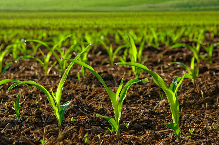 n fix crops