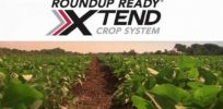 How Monsanto's 'big bet' on dicamba tolerant GMOs may have backfired