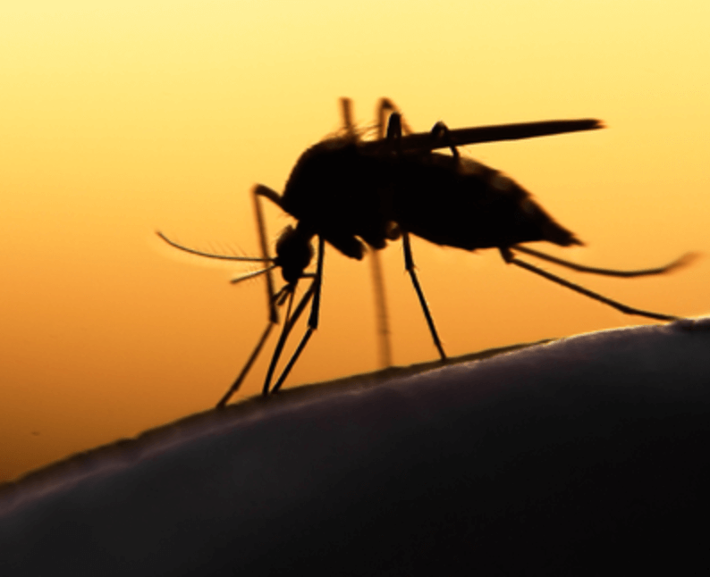 What is worst case scenario if genetically altered sterile male mosquitoes released to fight Zika?