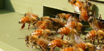 Media shouting match over neonicotinoids isn't helping bees