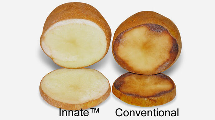simplot innate potato mcdonalds si