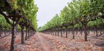 vineyard 12 14 17 1