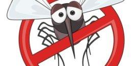 No Mosquito shutterstock x