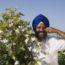 pic-bt-cotton-punjab-farmer