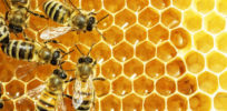 'Advocacy research' tying neonicotinoids to bee deaths debunked, but still effective propaganda