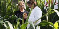 Hillary GMO MAIN