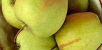 Video: Non-browning GMO golden delicious apples harvested commercially for first time