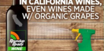 Glyphosate in wine and cereal? Why dubious detection methods undermine GMO scare claims