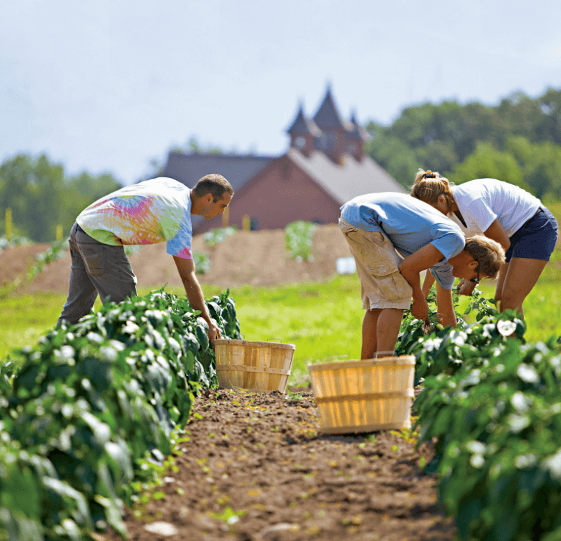 How are family farms faring as companies buy land to meet growing organic food demand?