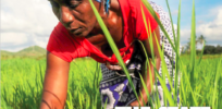 UN FAO report endorses biotech crops as important climate change tools