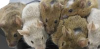 Live mice created from artificial eggs for first time