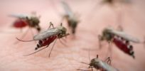 mosquito swarm Wilmington Myrtle Beach