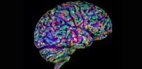 Growing hybrid human-chimp brains to understand intellectual differences and disease