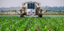 Is the herbicide glyphosate, often paired with GMOs, especially dangerous?