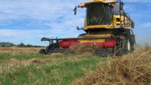 Ryegrass harvesting in South Canterbury. If a neighbor who wants to avoid GM takes no preventative measures he would have a reasonable expectation that no more than 1 per cent of the species in question would be cross-pollinated by the neighbors GM crop.